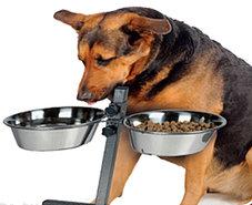 Hondenvoerbak-Drinkbak-(verstelbaar)