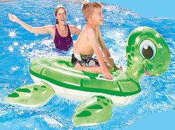 Schildpad-voor-in-het-Zwembad